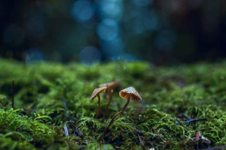 close up photo of mushrooms